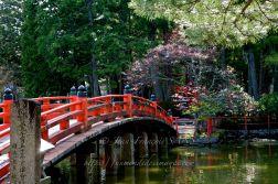 Pont et cerisiers en fleurs