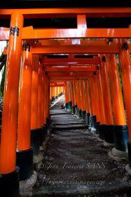KYO impressionnante enfilade de Torii s'échelonnant sur quatre kilometres.