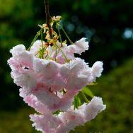 KYO au printemps