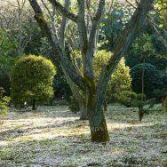 22-KYOTO neige de printemps