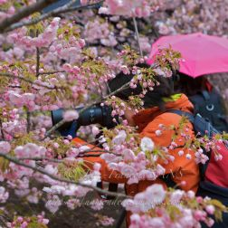 Phtographe dans les fleurs du parc Shinjuku-gyoen de Tokyo
